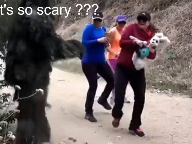 Bushman Scare Pranks! | Scaring dogs & people! | compilation | pt 3